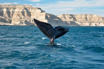Puerto Madryn Octubre. Paquetes all inclusive desde Argentina. Consultas a info@puravidaviajes.com.ar Tel. (11) 52356677