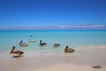 Varadero y La Habana. Paquetes all inclusive desde Argentina. Consultas a info@puravidaviajes.com.ar Tel. (11) 52356677