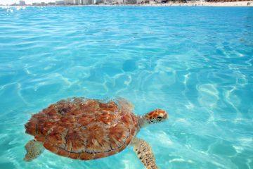 Cancún 4 de Enero. Paquetes all inclusive desde Argentina. Consultas a info@puravidaviajes.com.ar Tel. (11) 52356677