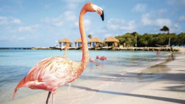 Aruba Vacaciones 2018. Paquetes all inclusive desde Argentina. Consultas a info@puravidaviajes.com.ar Tel. (11) 5235-6677.