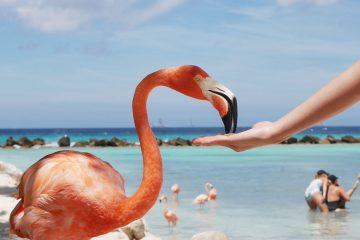 Aruba Septiembre y. Paquetes all inclusive desde Argentina. Financiaciones. Consultas a info@puravidaviajes.com.ar Tel. (11) 5235-6677.