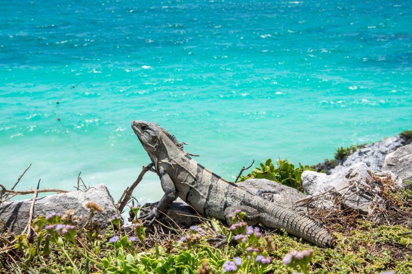 Riviera Maya 1 de. Paquetes all inclusive desde Argentina. Financiaciones. Consultas a info@puravidaviajes.com.ar Tel. (11) 5235-6677.