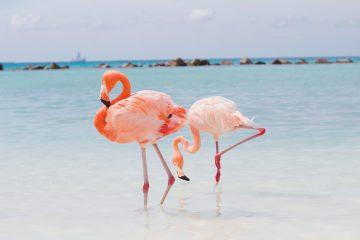 Aruba Vacaciones 2018. Paquetes all inclusive desde Argentina. Financiaciones. Consultas a info@puravidaviajes.com.ar Tel. (11) 5235-6677.