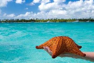 Punta Cana Marzo. Paquetes all inclusive desde Argentina. Financiaciones. Consultas a info@puravidaviajes.com.ar WP +54 9 11 3080-3344