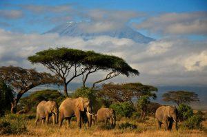 Kenia y Tanzania con. Paquetes desde Argentina. Financiaciones. Consultas a info@puravidaviajes.com WhatsApp: 1130803344