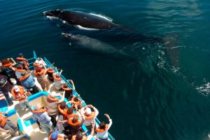 Puerto Madryn. Paquetes All inclusive desde Argentina. Consultas a info@puravidaviajes.com.ar Tel. (11) 52356677