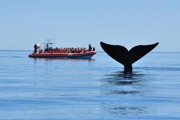 Ballenas, Península. Paquetes All inclusive desde Argentina. Consultas a info@puravidaviajes.com.ar Tel. (11) 52356677